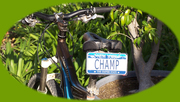 Bicycle license plates by MINIPL8S.com